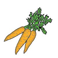 semena za zelenjavni vrt, semena zelenjave, profesionalna semena za vrtičkarje, semena za vrt, Agrotech - Korenček