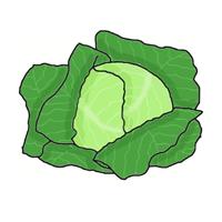 semena za zelenjavni vrt, semena zelenjave, profesionalna semena za vrtičkarje, semena za vrt, Agrotech - Zelje