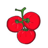 semena za zelenjavni vrt, semena zelenjave, profesionalna semena za vrtičkarje, semena za vrt, Agrotech - Paradižniki