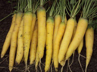 semena za zelenjavni vrt, semena zelenjave, profesionalna semena za vrtičkarje, semena za vrt, Agrotech - Goldnugget