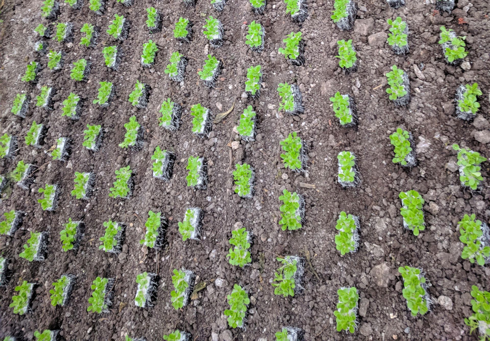 semena za zelenjavni vrt, semena zelenjave, profesionalna semena za vrtičkarje, semena za vrt, Agrotech - IMG_20171106_081856