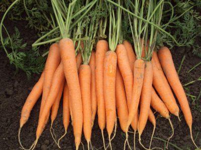 semena za zelenjavni vrt, semena zelenjave, profesionalna semena za vrtičkarje, semena za vrt, Agrotech - Soprano-1