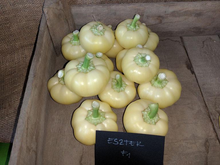 semena za zelenjavni vrt, semena zelenjave, profesionalna semena za vrtičkarje, semena za vrt, Agrotech - eszter