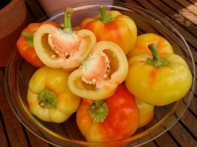 semena za zelenjavni vrt, semena zelenjave, profesionalna semena za vrtičkarje, semena za vrt, Agrotech - ez7