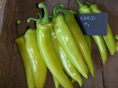 semena za zelenjavni vrt, semena zelenjave, profesionalna semena za vrtičkarje, semena za vrt, Agrotech - kard