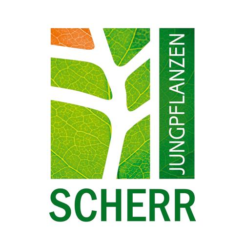semena za zelenjavni vrt, semena zelenjave, profesionalna semena za vrtičkarje, semena za vrt, Agrotech - jungpflanzen-scherr-logo1